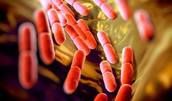 Descubra 6 alimentos ricos em probióticos para incluir em seu cardápio